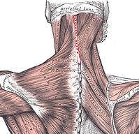 chiropractors and work comp