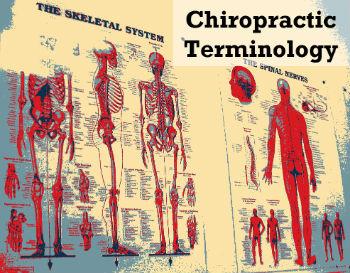 chiropractic terminology