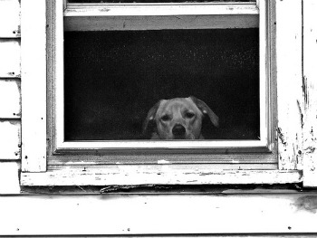 sad dog sad work comp employee