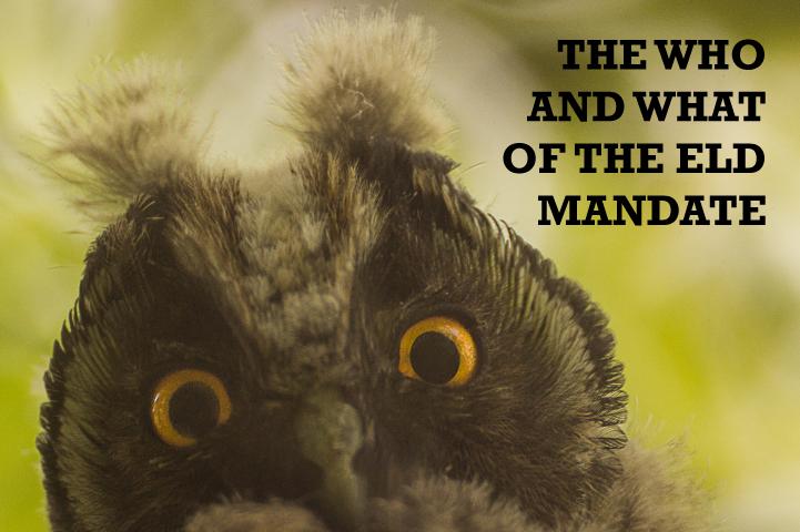 animals-birds-owl-fauna.png